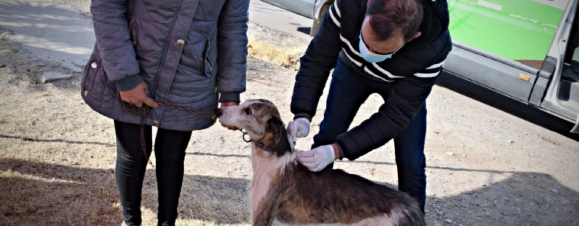 Más de 700 mascotas fueron vacunadas contra la rabia en Pocito